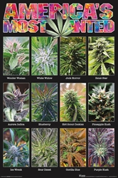 Americas Most Wanted  weed, pot, reefer, marijuana, cannabis