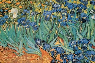 Van Gogh Garden of Irises