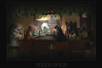 Weed Dogs
